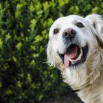Higiene dental canina