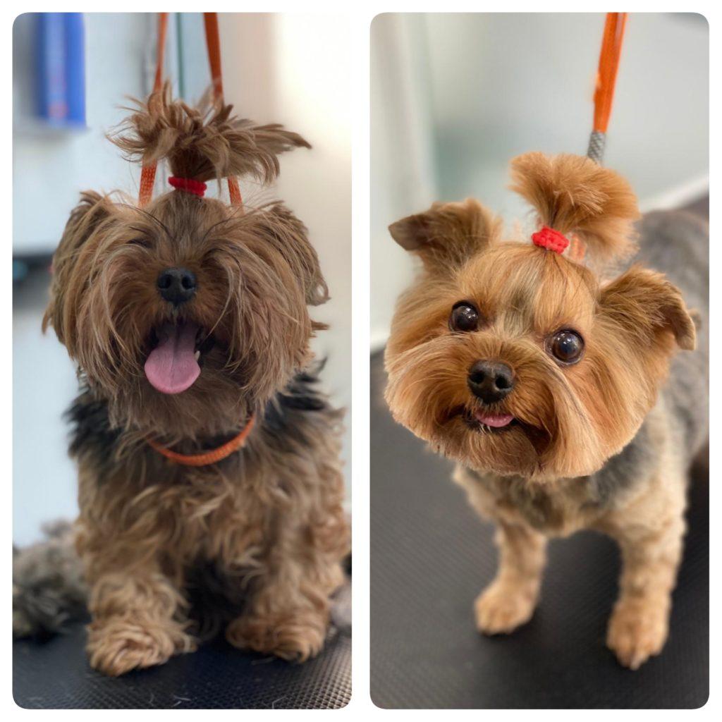Kalvin, Yorkshire antes y después de su sesión de peluquería