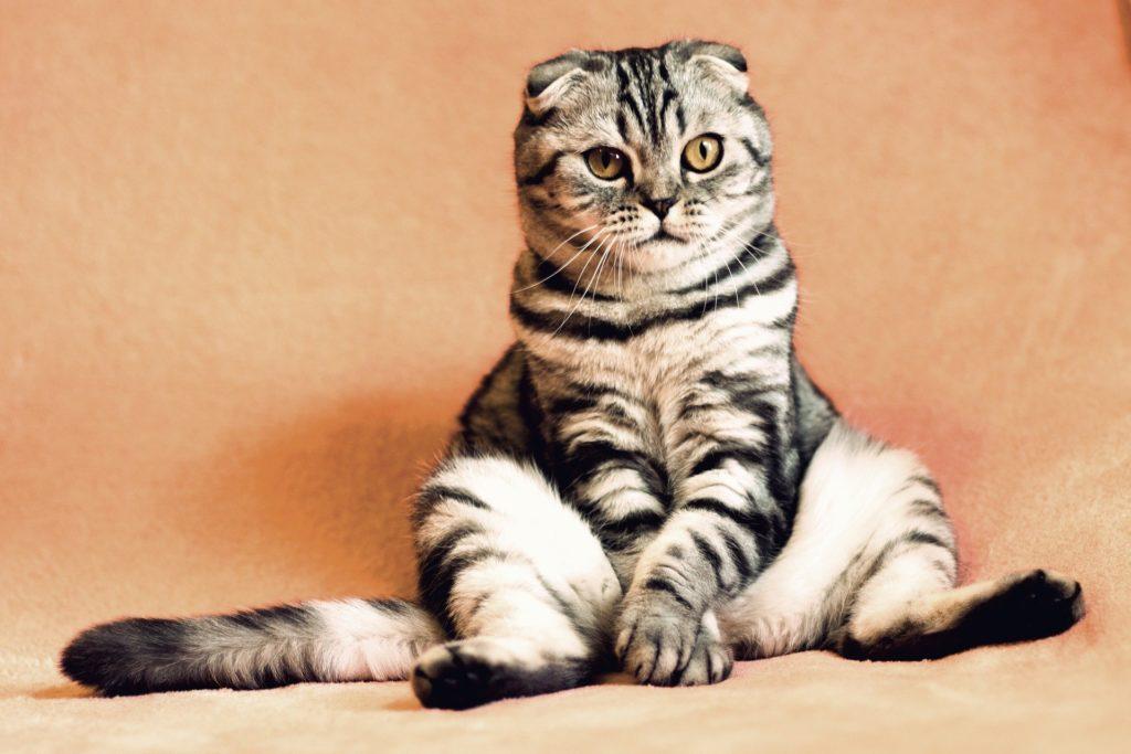 Gato sentado como una persona