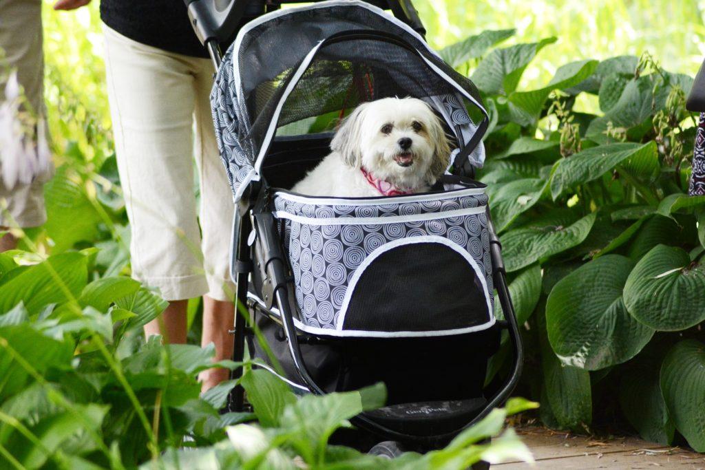 Un perro montado en un carrito de un bebé