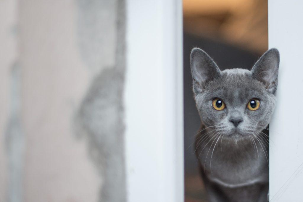 Gato asomado a la ventana
