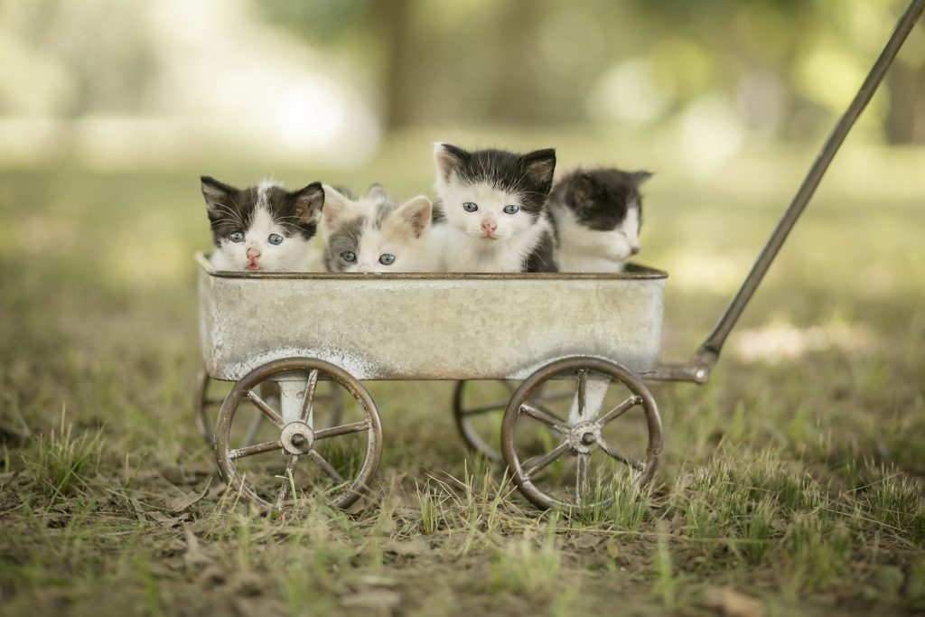 Cuatro gatos cachorritos en un carro