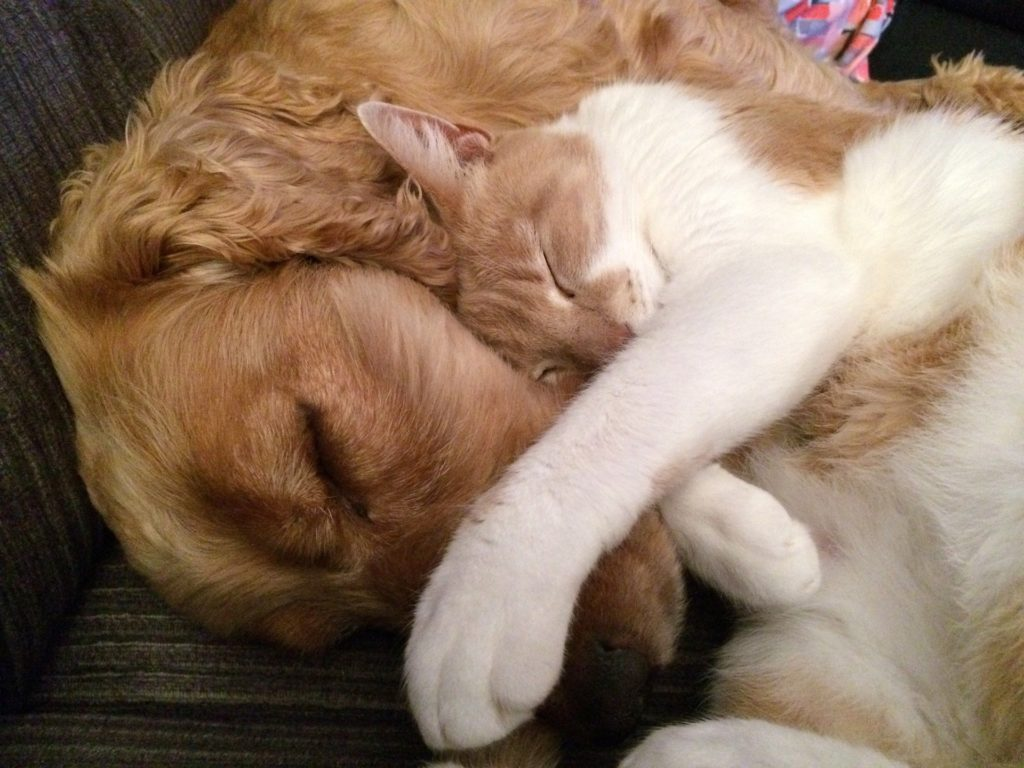 Perro y gato dormidos abrazados