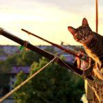 Síndrome del gato paracaidista